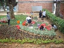 【東海大學校園第一教學區裸露地生態永續改善及美化專案】計畫成效